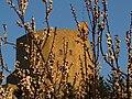 Il castello ed il risveglio della natura.jpg