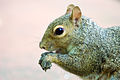 Im a squirrel... feed me (2897666882).jpg