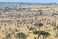 Impressions of Serengeti (109).jpg