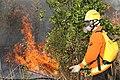 Incêndio no Parque Nacional de Brasília (36925811075).jpg