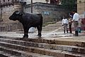 India DSC01046 (16536568779).jpg