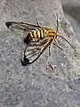 Insecto La Paz.jpg