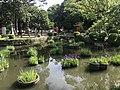 Iris Pond of Kashii Shrine 5.jpg