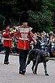 Irish Guards Buckingham Palace 2017.jpg
