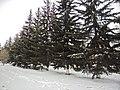Irkutsk. Akademgorodok. February 2013 - panoramio (151).jpg