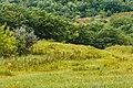 Izvoare – Risipeni, monument al naturii img 024.jpg
