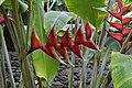 Jardim Botânico da Madeira DSC 0363 (14696730871).jpg