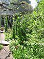 Jardin Treille Villette Mai 2016 036.JPG