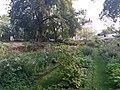 Jardin des Plantes de Poitiers 08.jpg