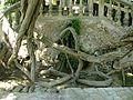 Jardines de Alfàbia (11).jpg