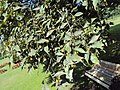Jawaharlal Nehru Memorial Botanical Gardens, Srinagar 11.JPG