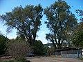K Radotínu, stromy.jpg