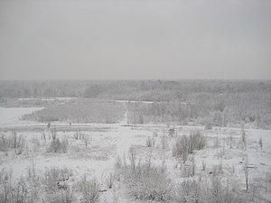 Kabaty Woods - Kabaty Woods in snow