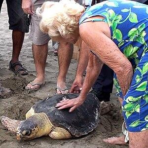 İztuzu Beach - June Haimoff at the release of a rehabilitated loggerhead turtle