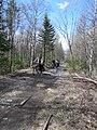 Katav-Ivanovsky District, Chelyabinsk Oblast, Russia - panoramio (14).jpg