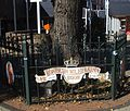 Katwijk kunstwerk wilhelminaboom.jpg