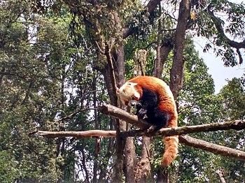 Keep Calm & Love Red Panda!.jpg