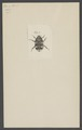 Kend - Print - Iconographia Zoologica - Special Collections University of Amsterdam - UBAINV0274 001 06 0046.tif