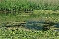 Kerkini wetland 2.jpg