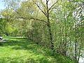 Klášterní rybník, břeh II.jpg
