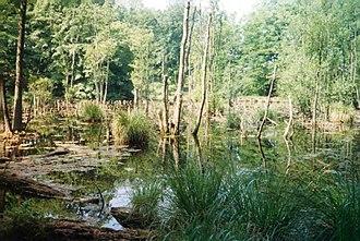 Møns Klint - Møns Klint: a pond in the Klinteskov woods