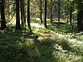 Koettmannsdorf Ploeschenberg Wald 19062011 255.jpg