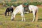 Konie mongolskie w Parku Narodowym Gorchi-Tereldż 05.JPG