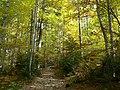 Konina, Poland - panoramio (3).jpg