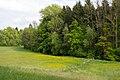 Lügde - 2015-05-24 - LIP-021 Emmertal (am Eschenbach) (46).jpg