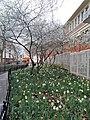 LE PRINTEMPS ARRIVE - Flickr - marsupilami92.jpg