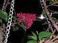 La florecilla nocturna... y el insecto -) - panoramio.jpg