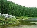 Lagoa do Canário (Portugal) (58474994).jpg