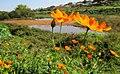 Lagoa no Parque Jambeiro - panoramio.jpg
