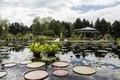 Lagoon in the Shofu-en Japanese Garden (Garden of Pines and Wind in English) at the Denver Botanic Gardens in Denver, Colorado LCCN2015633589.tif