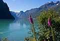 Lake Oldevatnet - Norway - panoramio.jpg