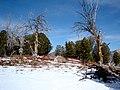 Lamoille Canyon Spring Creek NV - panoramio (1).jpg