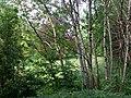 Landschaftsschutzgebiet Wäldchen bei Buer Melle Datei 13.jpg