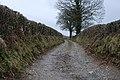 Lane up Cwn Iâr - geograph.org.uk - 1191902.jpg