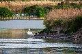 Las Gallinas Wastewater Ponds (36322828532).jpg
