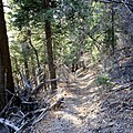 Last 1000 ft of the Road Canyon Trail (5508093323).jpg