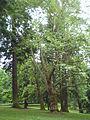 Laurelhurst Park trees 2011.jpg