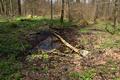 Lautertal Eichelhain Oberwald Eisenbach Spring SCI 555520690 FFH5322-306 g.png