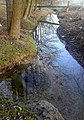 Lazega River Dabrowica.jpg