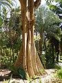 Le jardin botanique - panoramio - youssef alam.jpg