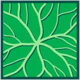 Leaf morphology rotate
