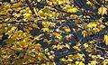 Leaves (1861950623).jpg