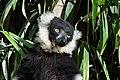 Lemur (36678710722).jpg