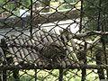 Leopard 042.jpg