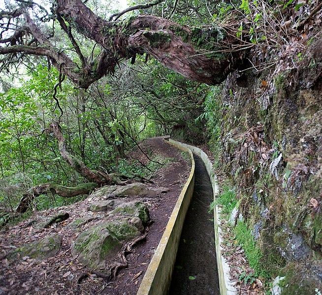 File:Levada do Furado, Madeira - 2013-04-05 - 90145210.jpg