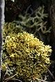 Lichen (20588085525).jpg